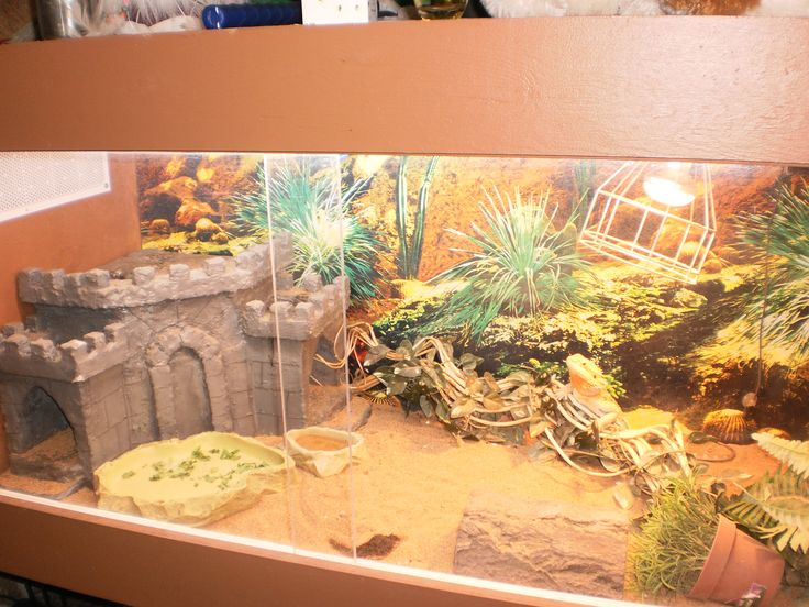 17 best images about bearded dragons habitats and decor for Decoration habitat