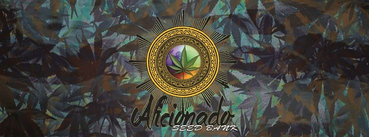 Aficionado's Of Cannabis Seed Bank