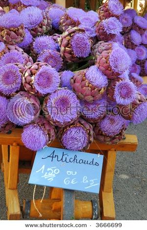 Beautiful artichoke flowers at Provençal market