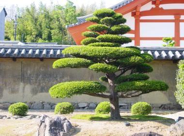 Nara: Horyuji Temple |japan-experience.com