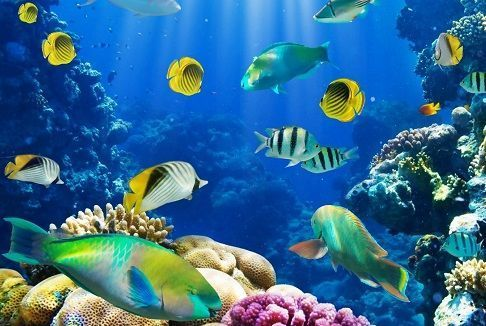 Peces | El pez es un vertebrado acuático con respiración branquial; sus extremidades tienen generalmente forma de aleta; su piel, salvo raras excepciones, está protegida por escamas; y su reproducción es mayoritariamente ovípara. Los peces constituyen un taxón o subdivisiónde la clasificación biológica.  Hemos desglosado los nombres de peces en varios subapartados que no coinciden obligatoriamente con la división que aplican actualmente los zoólogos. Estos subapartados son los…