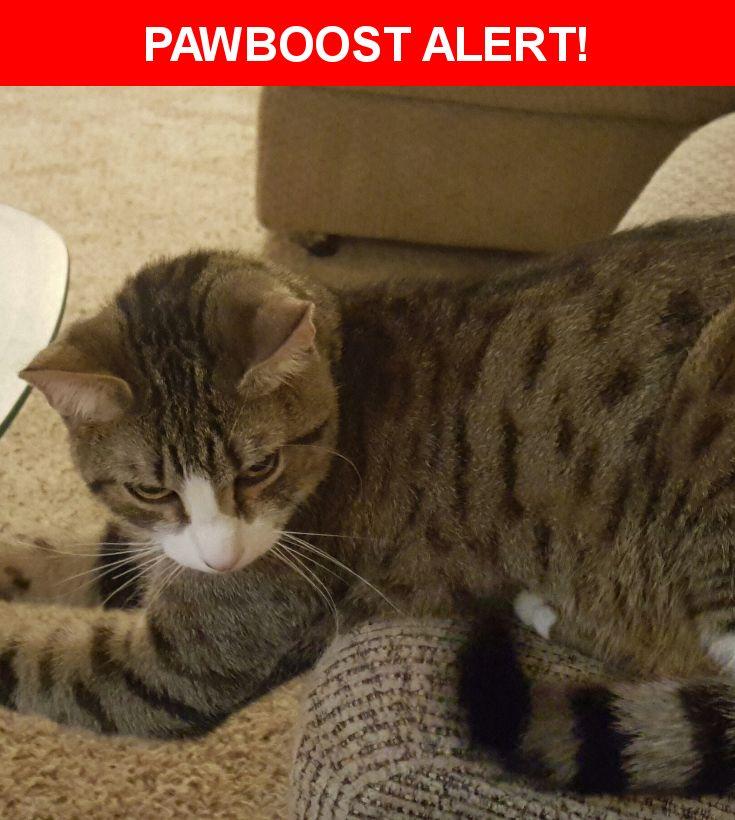Please spread the word! Elliott was last seen in Surprise, AZ 85378.    Nearest Address: 11474 West Saint John Road, Surprise, AZ, United States