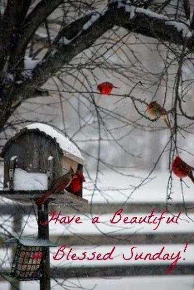Cardinal sunday message