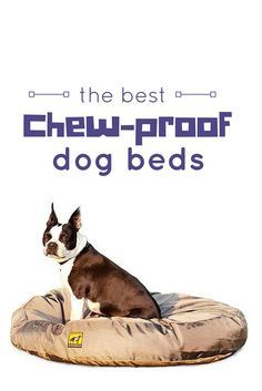 4 best chew proof dog beds for rough chewers best dogs for Good dog bed for chewers