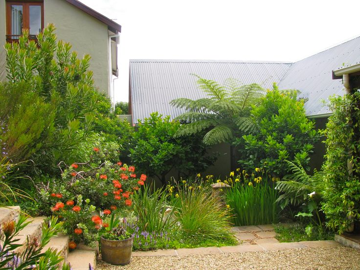 My indigenous garden in cape town i garden therefore i for Garden ideas south africa