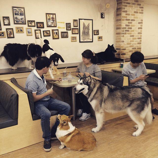Seoul Offbeat: Bau House Dog Cafe | Elisuper Offbeat Travel