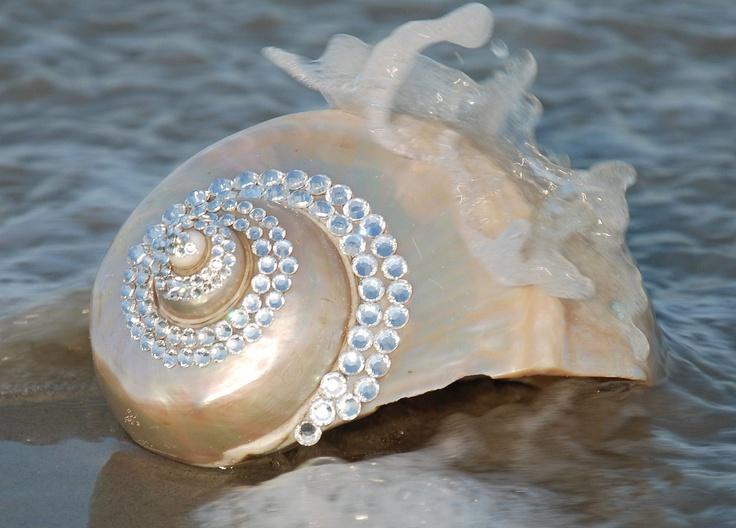 Pin by Alice Lyons on Beautiful Sea Shells   Pinterest