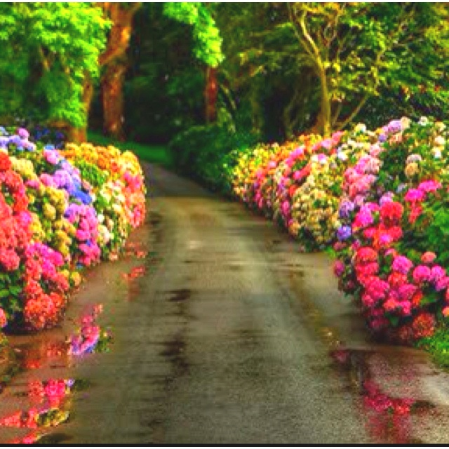 Flower Garden Path 128 best garden ~ hydrangeas images on pinterest | flowers