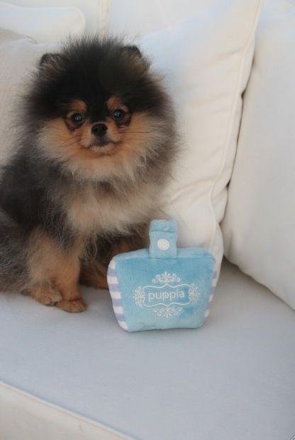 Pepe y su nuevo peluche de Puppia.  Disponible en http://www.dogsaffaire.com/juegos-y-deportes/tarjeta-peluche--725.html?search_query=bolso+&results=16