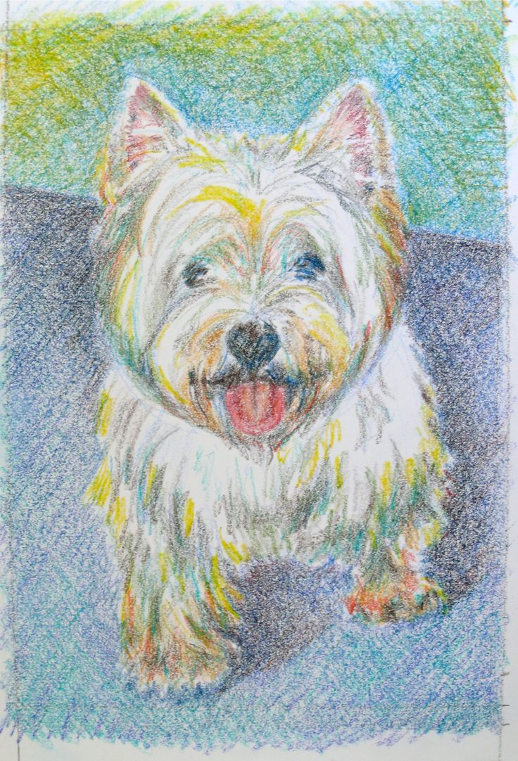 Frankie, coloured pencil, artist's private collection