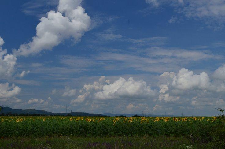 На полях Крыма почти созрели подсолнухи. В сочетании с удивительными облаками на голубом небе и изумрудной травой - они смотрятся, как поле маленьких солнышек посаженных рукой художника.  С уважением к приключениям, команда hikeup.net