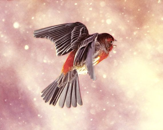Finch Flying