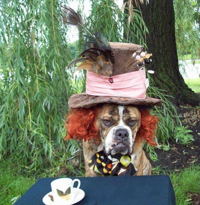 DIY Mad Hatter!  22 Funny Dog Costumes for Halloween via Brit + Co.