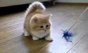Cats, Dogs And Other Animals Funny Viral Stuff