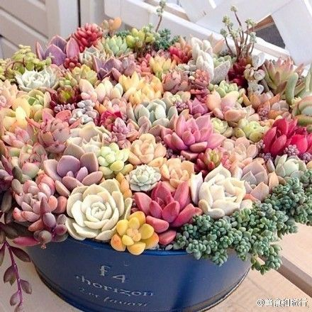 """succulents are such low maintenance plants!!! Creating small and large arrangements with them is a great way to add """"life"""" to your outdoor living spaces."""