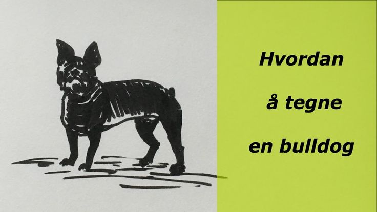Hvordan å tegne en bulldog. How to draw a bulldog. draw dog,videos, animal, youtube, draw art, draw animalssketch, tegning, videos, sketches www.maleriarenaer.com