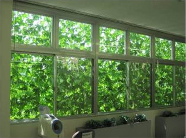 ivy green wall system - Google Search