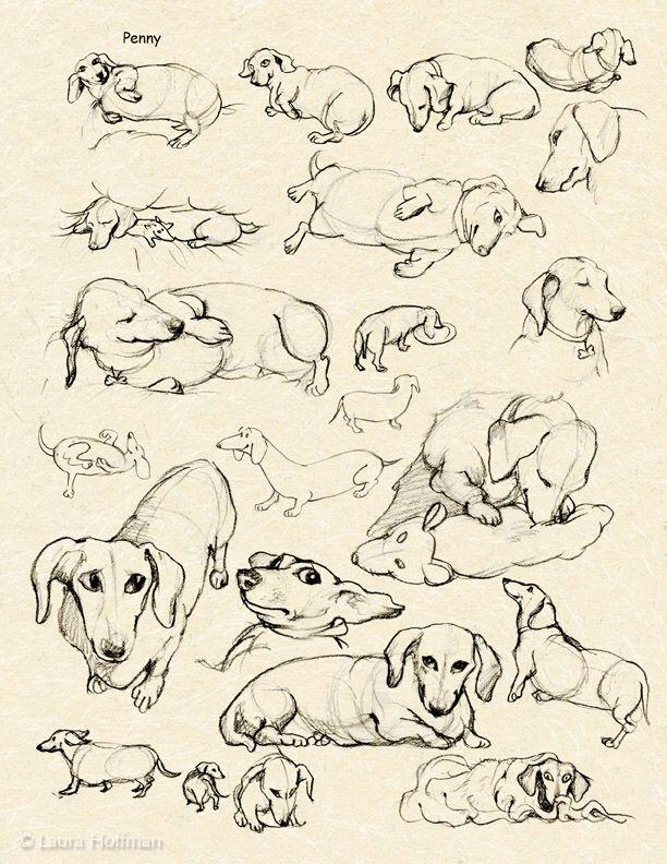 Dachshund sketches...