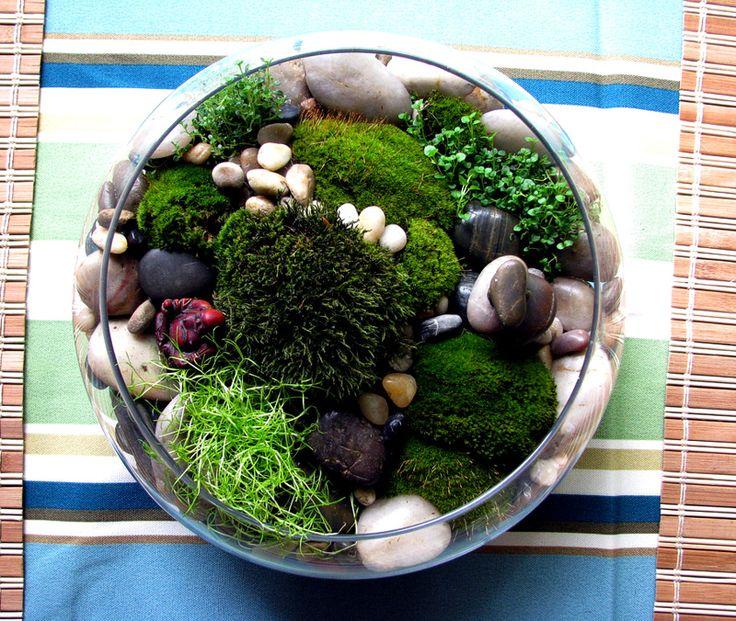 Маленькие сады. Комментарии : LiveInternet - Российский Сервис Онлайн-Дневников