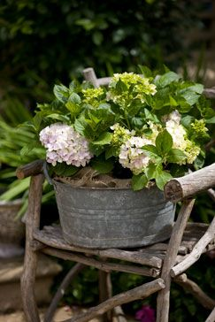 Driven By Décor: Galvanized Metal Tubs, Buckets, & Pails as Planters: Idea, Galvanized Buckets, Wash Tubs, Galvanized Metals, Metals Tubs, Flowers, Old Chairs, Rustic Chairs, Hydrangeas