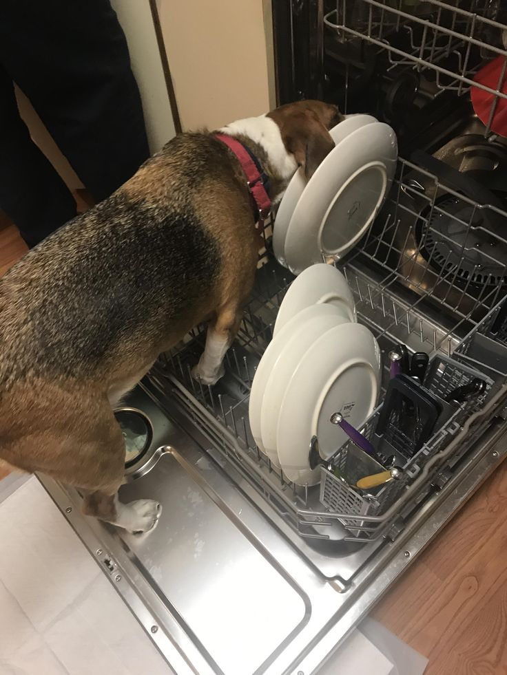 Apparently I have two dishwashers... http://ift.tt/2tkDIeX