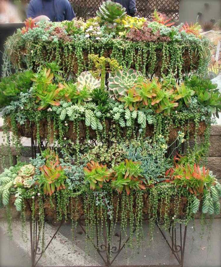 étagère en métal avec des plantes succulentes