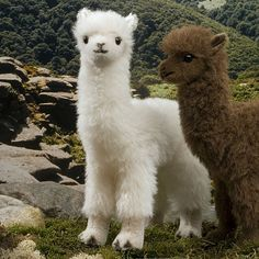 fluffy baby alpaca - Google Search