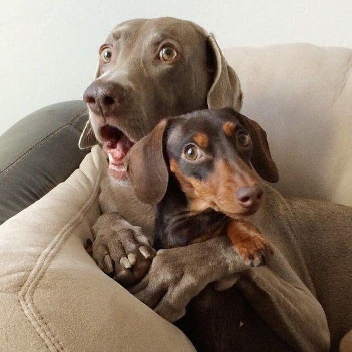Фото собак с надписями смешные до слез, можно подписать открытку