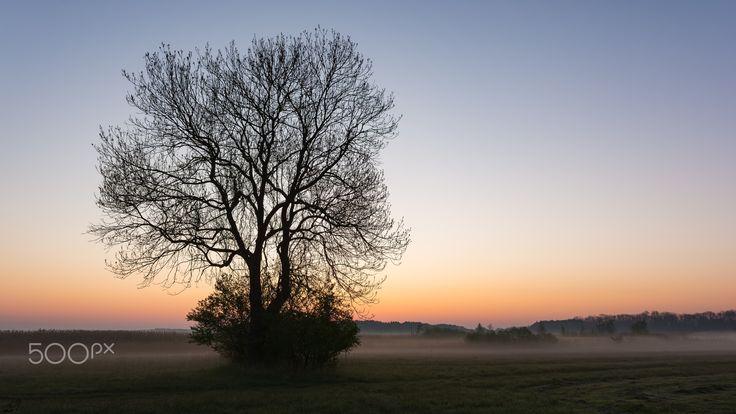 Single Tree on Sunrise - Single tree on misty sunrise near Myśliborskie Lake