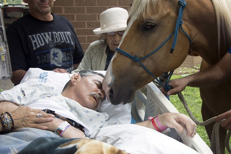 This Saturday, May 21, 2016, photo provided by South Texas Veterans Health Care System shows Roberto Gonzalez with one of his horses in San Antonio. The paralyzed Vietnam veteran's wish of seeing his horses was granted by the Audie L. Murphy Memorial Veterans Hospital and he spent some time with two of his horses outside of the hospital where he was a patient. Gonzalez died Monday. (Lupe Hernandez/South Texas Veterans Health Care System via AP) MANDATORY CREDIT via @AOL_Lifestyle Read more…
