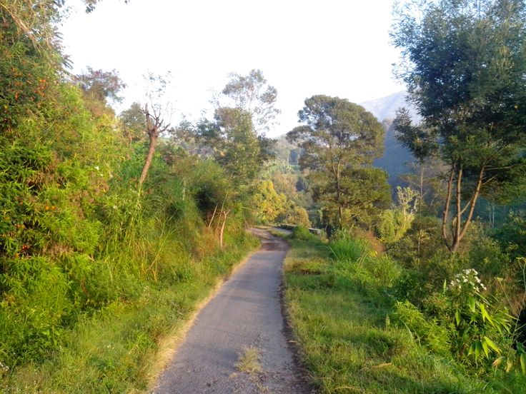 It's main road to sub-district Selo from Suroteleng village.