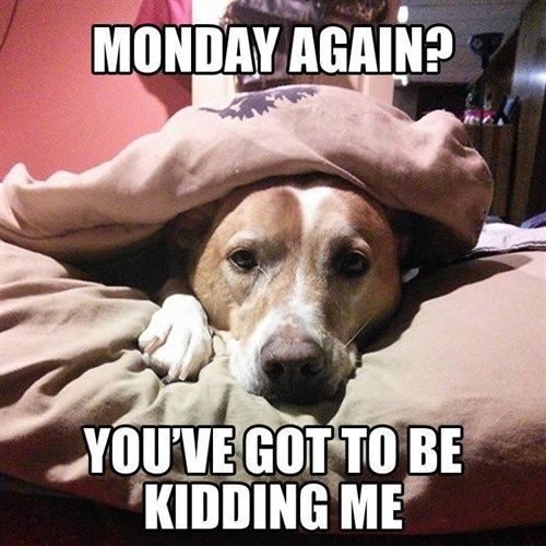 Monday Again? You've Got To Be Kidding Me