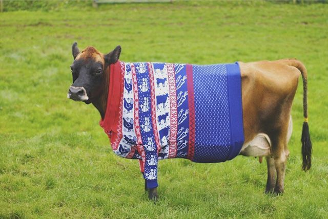 #christmasjumperday when we are so frickin ready for this Christmas with our new jumper! #merrychristmasyafilthyanimal