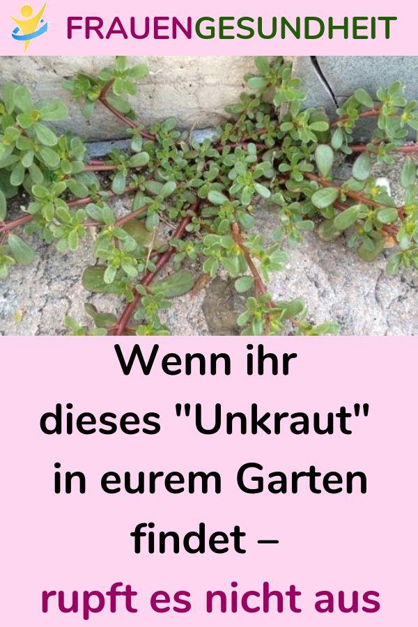 """Wenn ihr dieses """"Unkraut"""" in eurem Garten find…"""