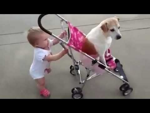WHEN DOGS & BABIES COLLIDE - YouTube