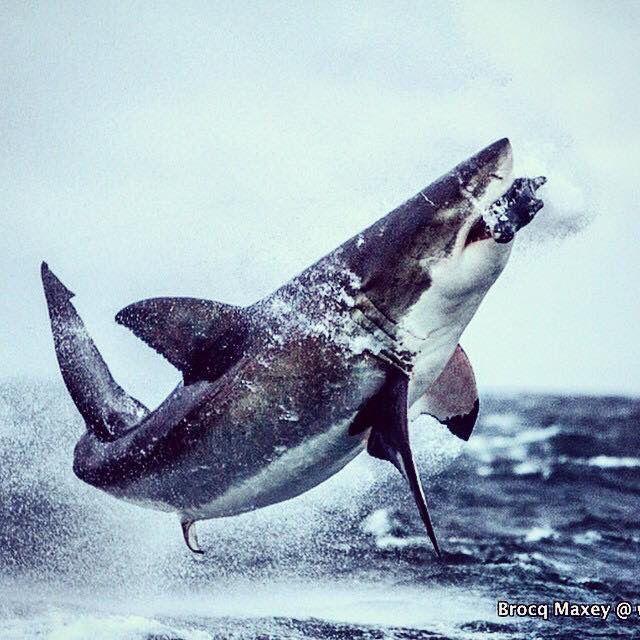Shark Shark, Shark Week, Water Quality, Underwater Creatures, Ocean  Creatures, Animal Photography, Sharks, Wild Animals, Animal Kingdom