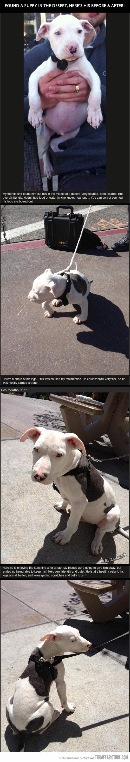 Friends found a puppy in the desert, faith in humanity restored…