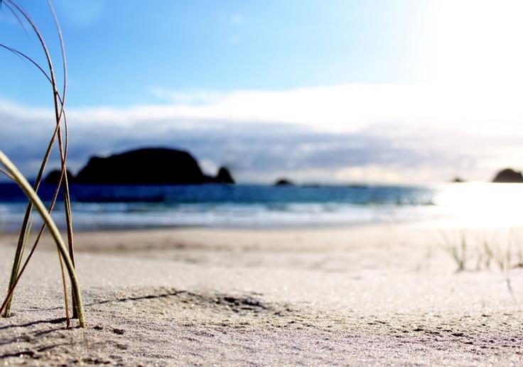 Morning sun on Grass - Hahei, New Zealand Beach, Summer, Ben Amies © 2012