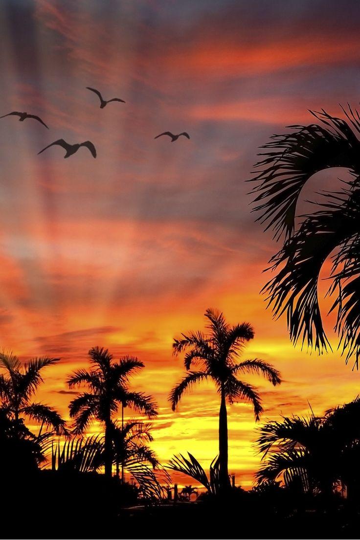 Wave / Beach / Rainbow / Surfing / Windsurfing / Yoga / Hula / Surf Fashion / Hawaii / Maui /...                                                                                                                                                                                 Más