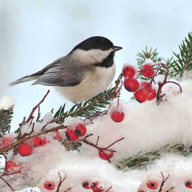 beautiful bird winter ndash - photo #14