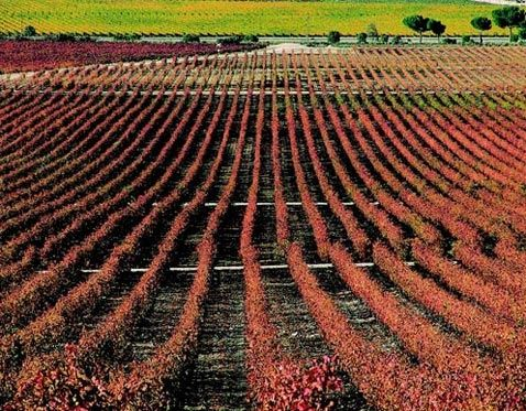 De ruta por Ribera del Duero - vinoterapia