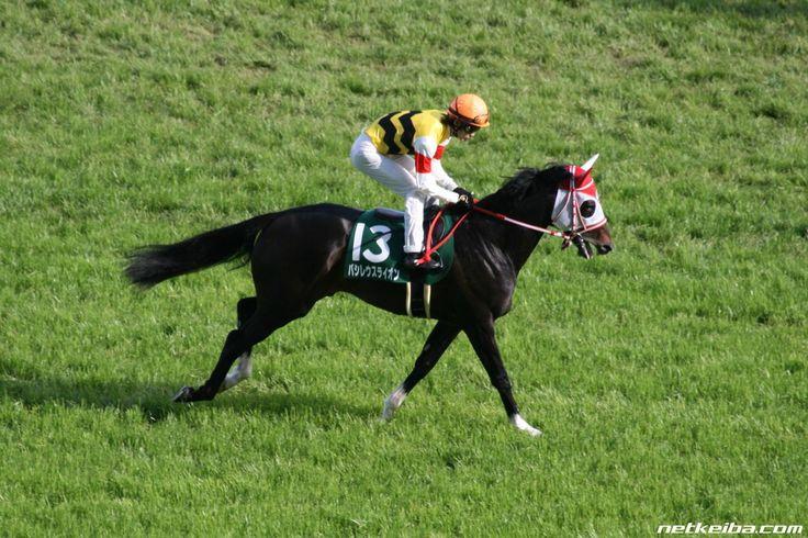 バシレウスライオン みんなの投稿写真|競走馬データ - netkeiba.com