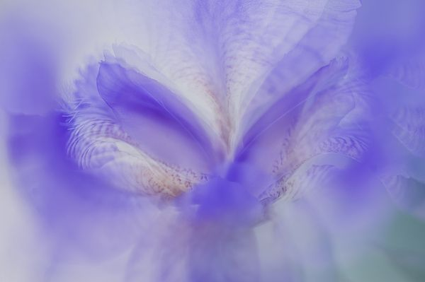 Ethereal Life 18. Interior Ideas by Jenny Rainbow.  #Abstract #Photography #Iris #Macro #PastelColors #InteriorDesign #IdeasForHome #HomeDecor #FloralDecor #Rainbow #FramedArt #Canvas #FineArtPhotography #jennyRainbowFineArtPhotography #Purple
