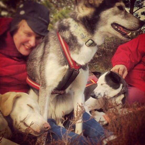Hundspannsäventyr på Småländska -äventyr för alla,  inklusive synskadade!  Välkommen till www.turochnatur.se