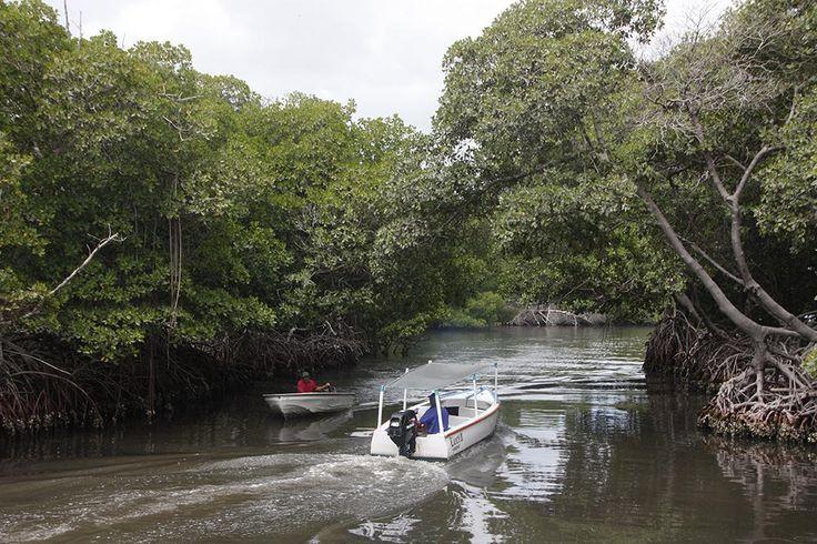 Laguna La Restinga