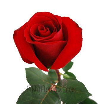 Velvety Grand Prix roses - lush