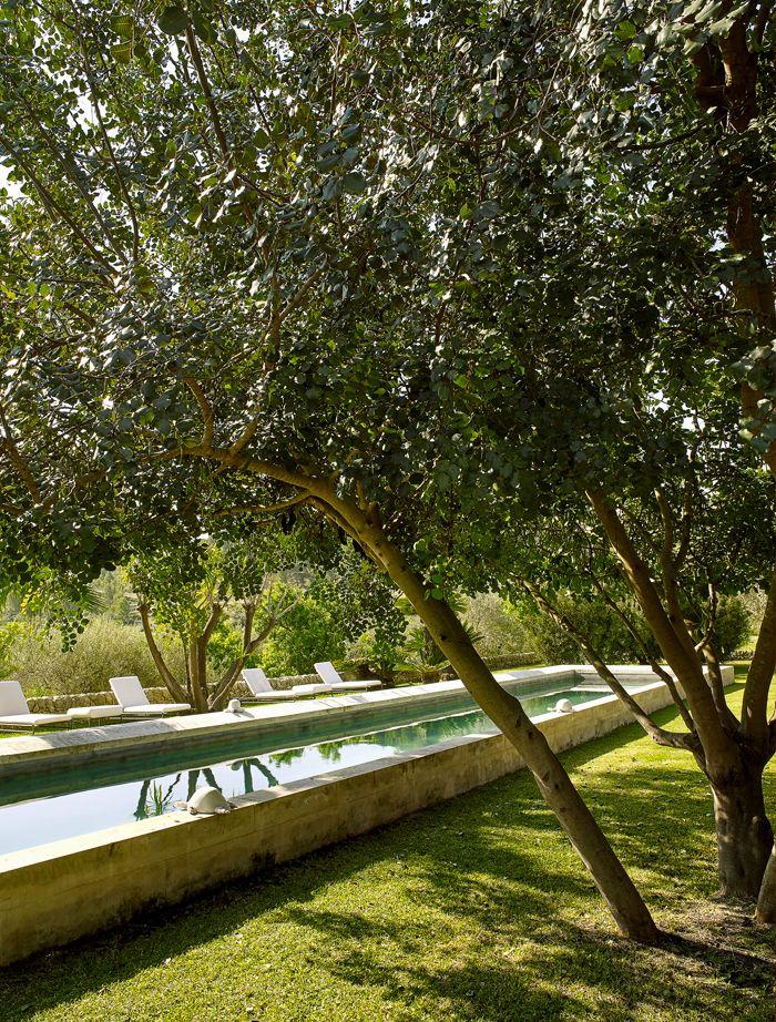Le couloir de nage, à l'ombre des oliviers.