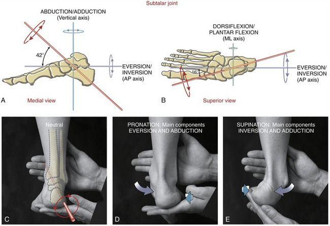 Znalezione obrazy dla zapytania talus osteokinematics