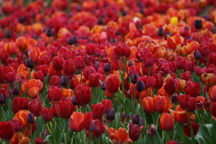 paisajes-coloridos-primavera7