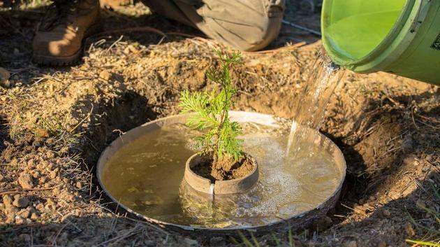 V suchých oblastech se zničenou půdou vyrůstají lesy jako houby po dešti